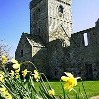 Inchcolm Abbey with Daffodils