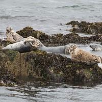 Three Bridges Cruise wildlife pic